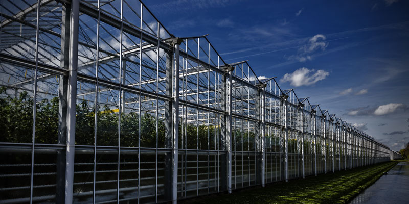Success Story Banner - IoT Greenhouse